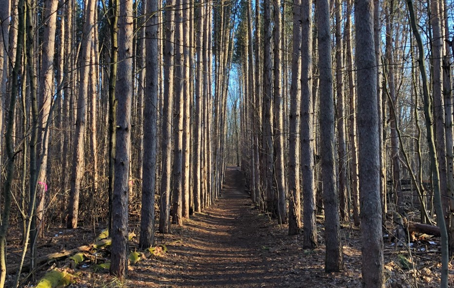 Photo of the Magnificent Pines trail.