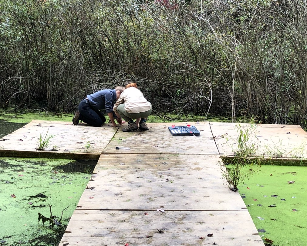 Two students trying to fix a section of wetland boardwalk