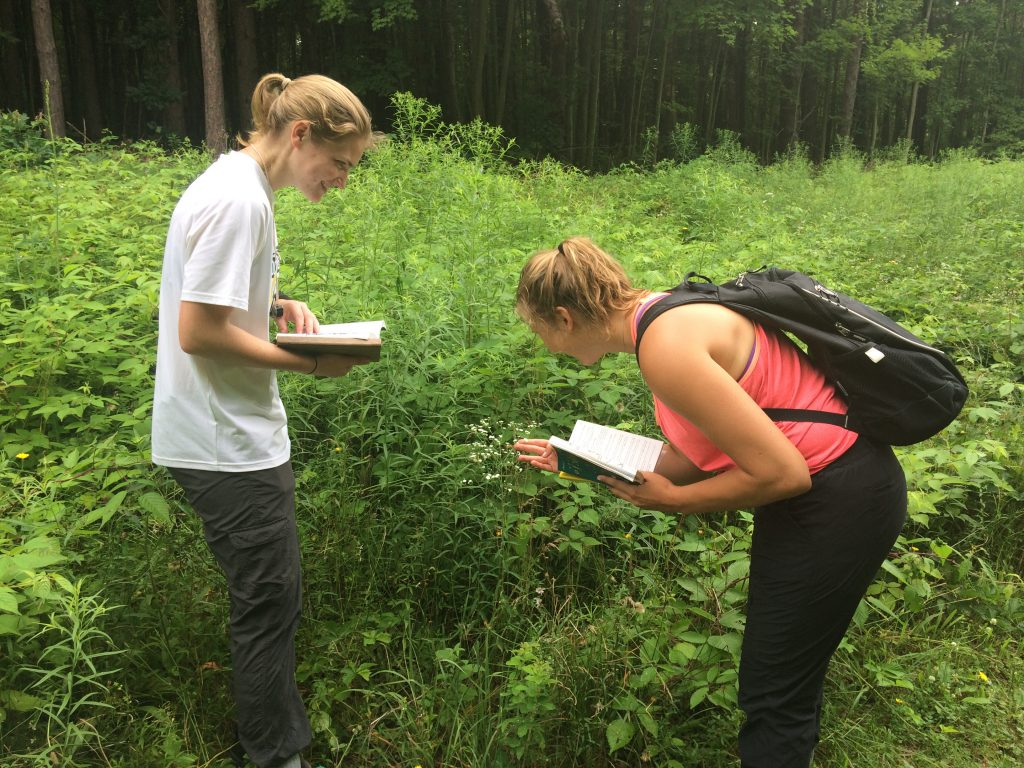 Two students observe a specimen of Flowering Spurge in a field