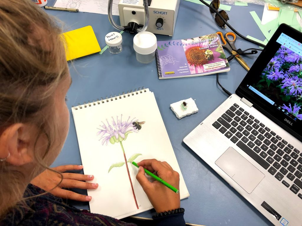 Student drawing a flower and bumblebee surrounded by reference photos.