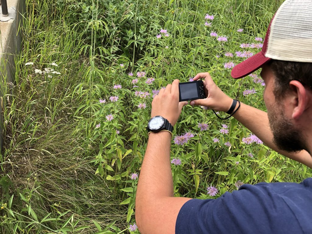 A student taking a picture of flowers.